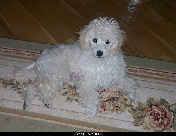 Наши домашние животные/Ous home pets-100_2468.jpg