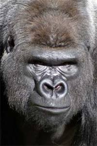 Name:  gorilla_.jpg