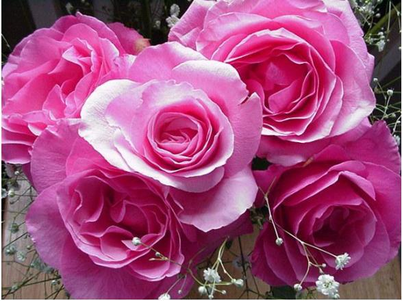 Name:  rose.JPG Views: 378 Size:  51.8 KB