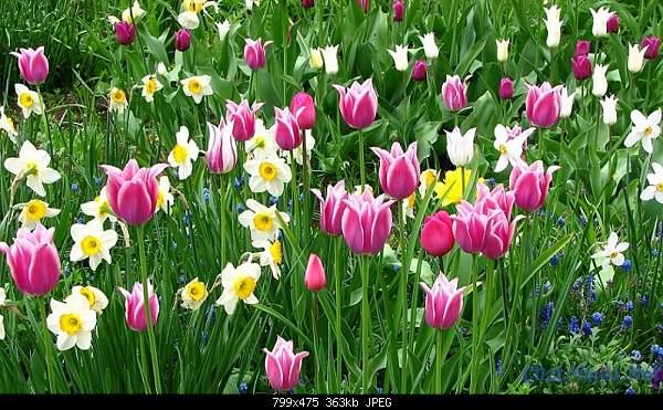 С первым днем весны! =)-flowers.jpg