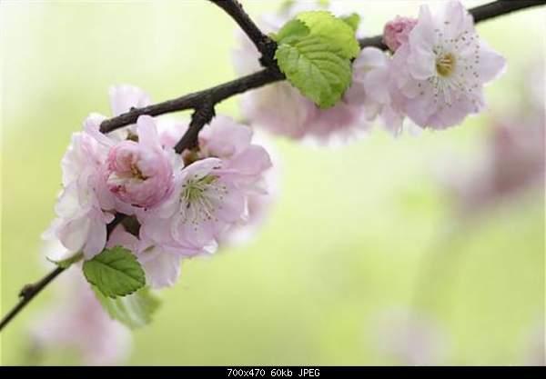 С первым днем весны! =)-484460.jpg